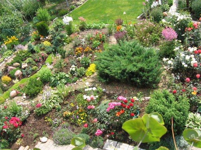 Высокие цветы многолетники для сада  фото и названия