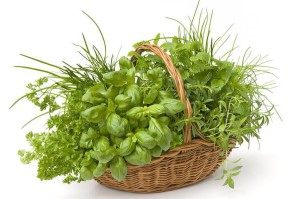 Growing Culinary Herbs 3