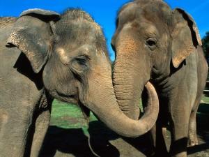elephant_03-o_1024x768