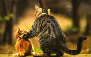 father_cat_and_son_2560x1600