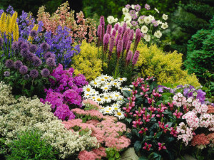 Perennial-Plant