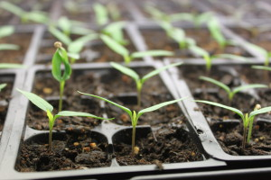 new-seeds